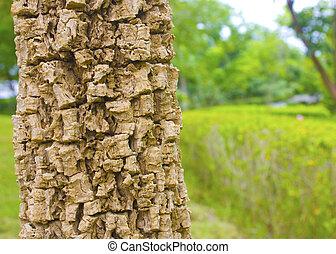 Tree bark in the garden park