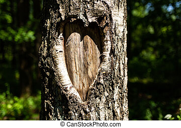 Tree bark in the shape of heart