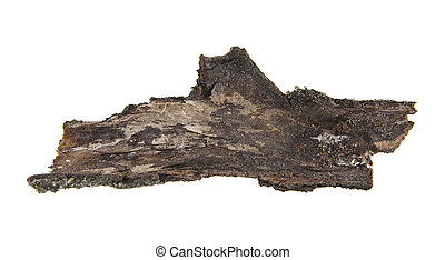tree bark isolated on white background