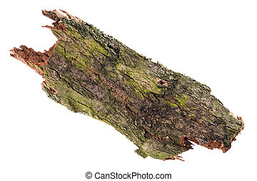 Tree Bark isolated over a white background