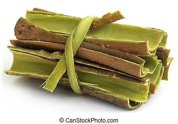 Tree bark of Moringa oleifera