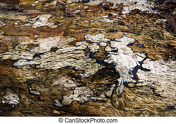 Tree bark pattern and texture