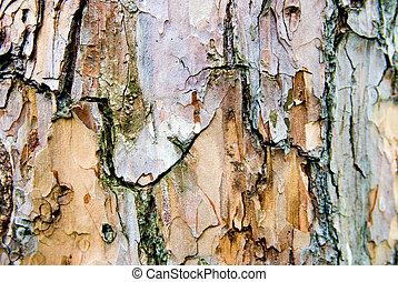 tree bark - pine bark