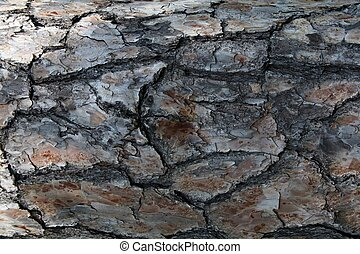tree bark texture for background - tree bark texture for use...