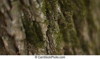Tree bark texture macro