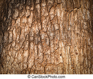 Tree bark texture. Nature wood background