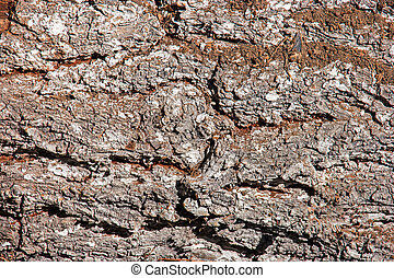 Tree bark texture wallpaper macro