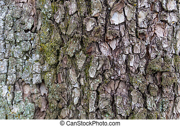 Tree bark texture. Wood background