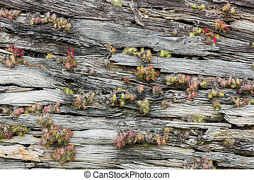 tree bark with moss, abstract background, texture