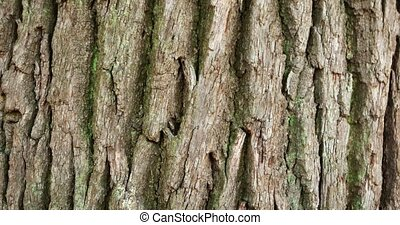 Tree Bark with Moss in Extreme Closeup - Rough, cracked ...