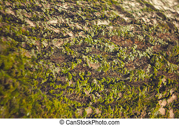 Tree bark with moss .