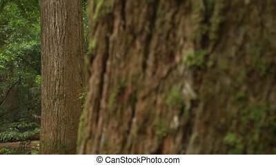 Tree bark with patterns - A macro shot of tree branch with...