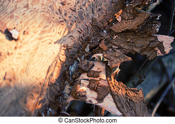 tree bark with termite tracks