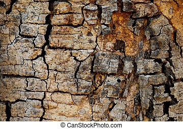 Tree bark wood texture abstract background