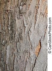 Tree bark wood texture background