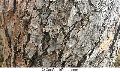 Tree bark / wood texture