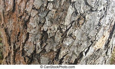 Tree bark / wood texture