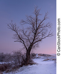 Tree. Beautiful winter sunset