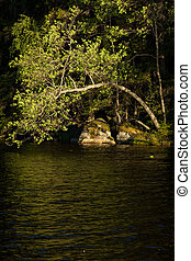 Tree bend over water in forest lake
