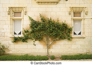 Tree between windows - the detail of a tree between two ...