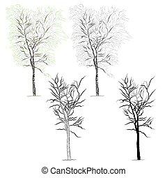 Tree birch vector