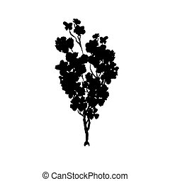 Tree black silhouette. Isolated on white.