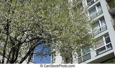 tree bloom beetle house