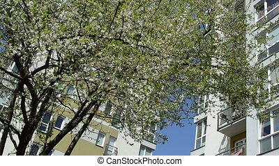 tree bloom flat house