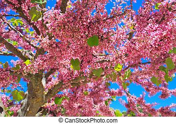 Tree blooming red flowers