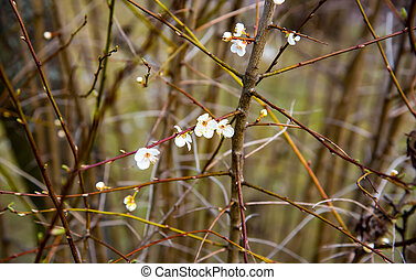 tree blossom in early spring