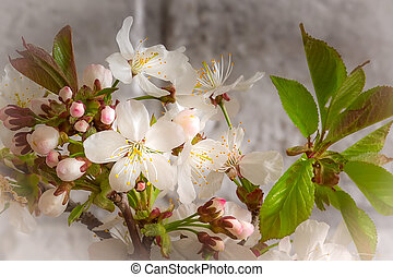 Tree blossoming branch with white flowers