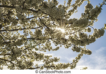 tree blossoming in springtime