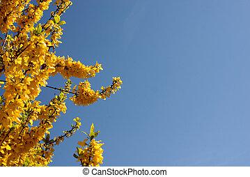tree blossoms on a blue sky