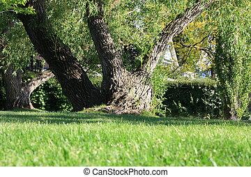 Tree bole
