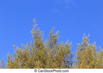 Tree branch and blue sky