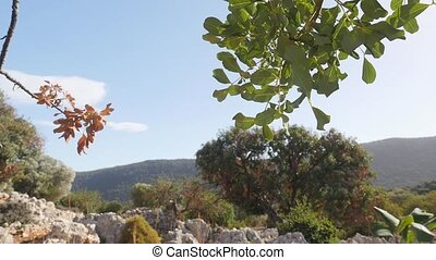 Tree branch and stone masonry of ancient house on background...