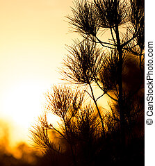 tree branch at sunset