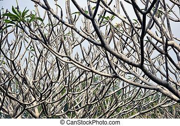 tree branch background