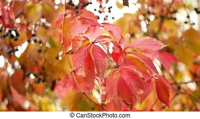 Tree branch berries autumn