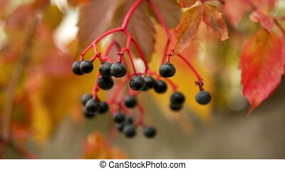 Tree branch berries autumn