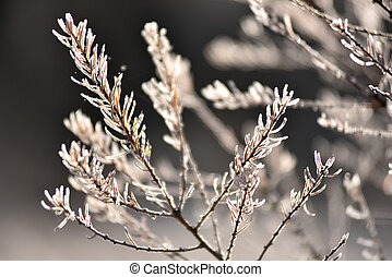 Tree branch covered with hoarfrost