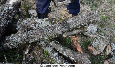 tree branch cut chainsaw