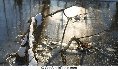 tree branch frozen in the ice forest river nature landscape...