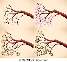 Tree branch in different seasons