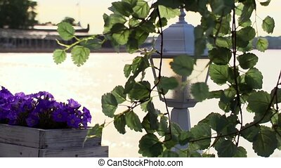 Tree branch in front of flashlight and flowerbed violet. Seafront on background.