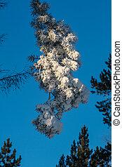 tree branch in hoarfrost