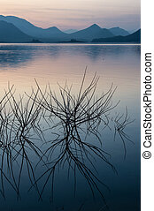Tree branch in the lake with mountain and sky landscape