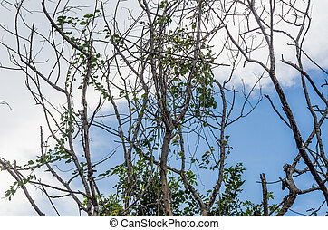 tree branch in the nature