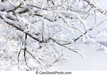 tree branch in the snow in the winter
