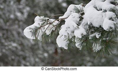 tree branch in the snow in wind christmas swinging winter forest nature landscape